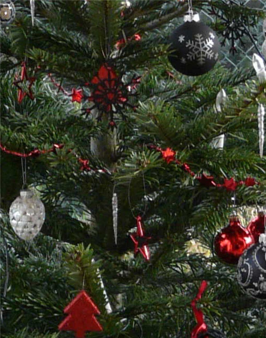 Tannenbaum Wegwerfen.Kostenloser Abfuhr Termin Für Tannenbäume