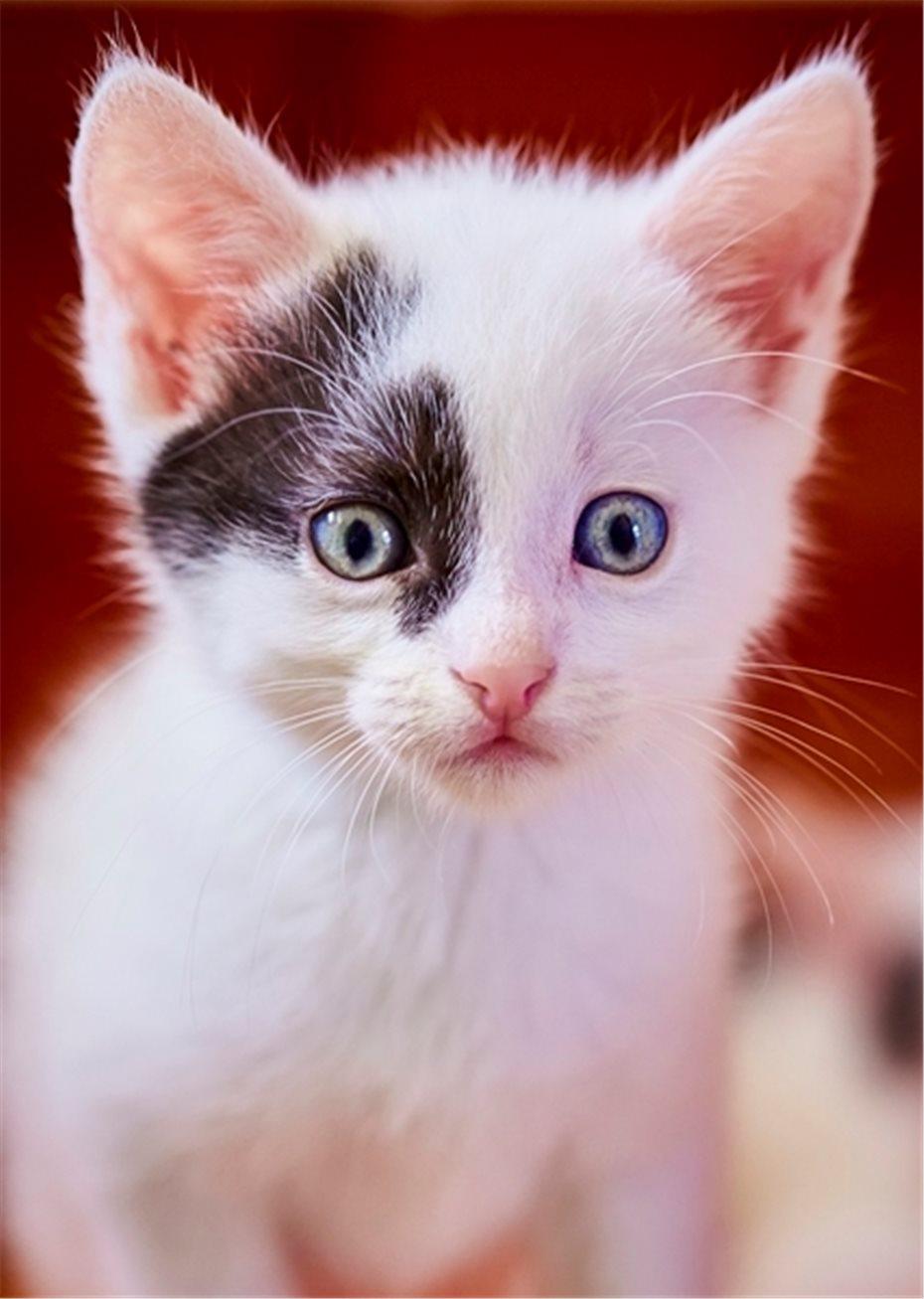 Katzenbabys Suchen Bald Ein Neues Zuhause
