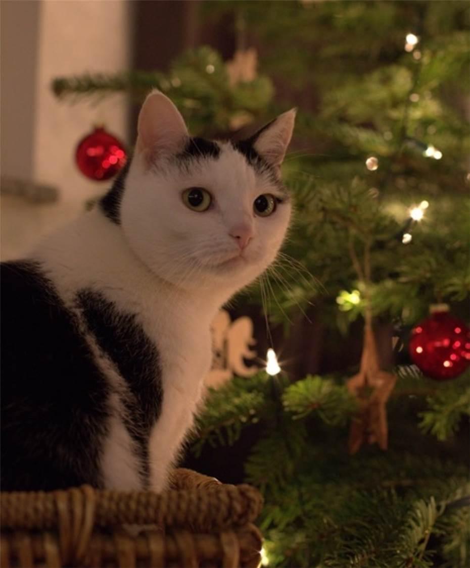 Bilder Weihnachten Tiere.Weihnachten Auch Für Die Tiere Vom Tierschutz