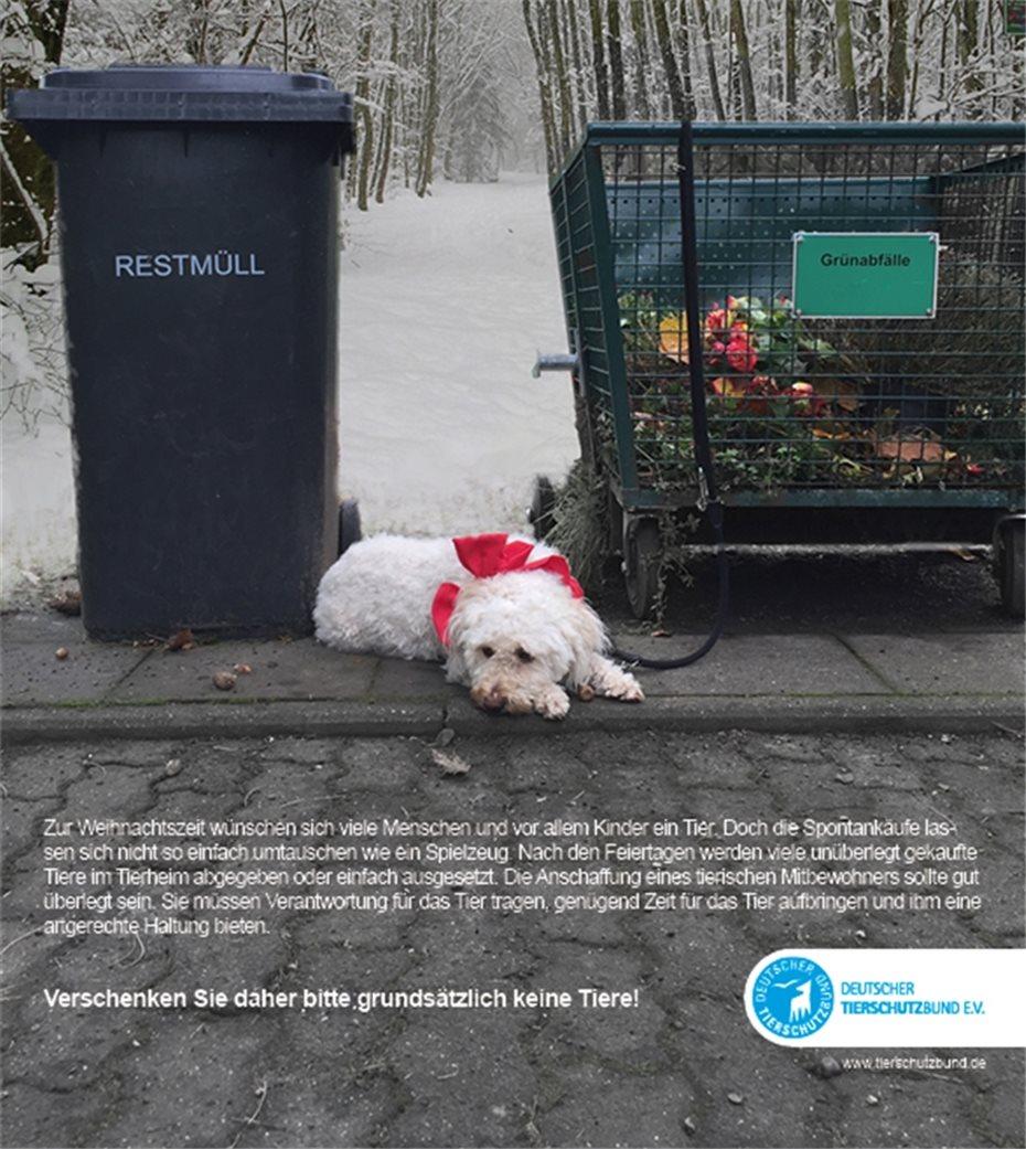 Weihnachtsgeschenke Keine Idee.Tiere Sind Keine Weihnachtsgeschenke