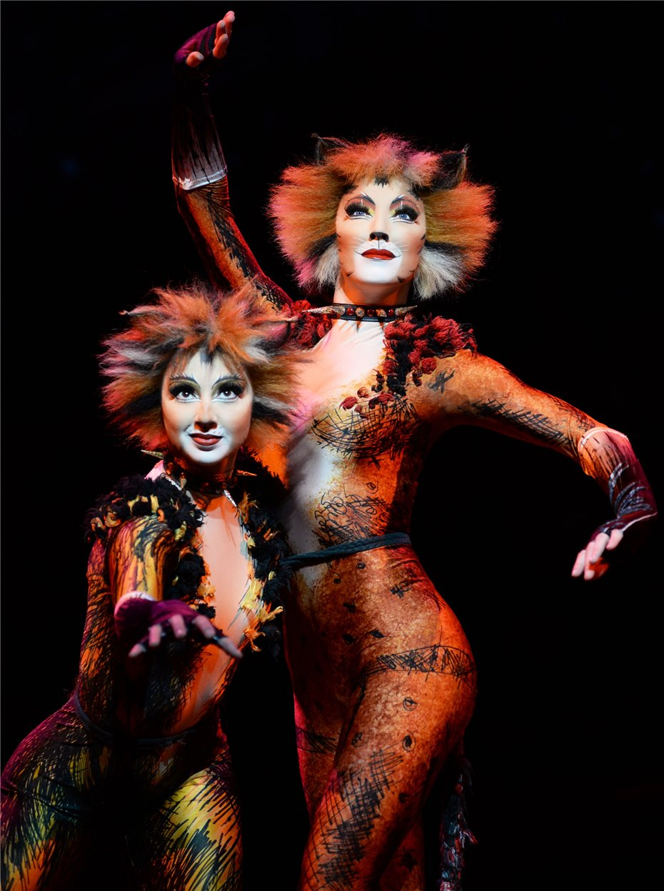 Cats In K Ef Bf Bdln Musical Dome